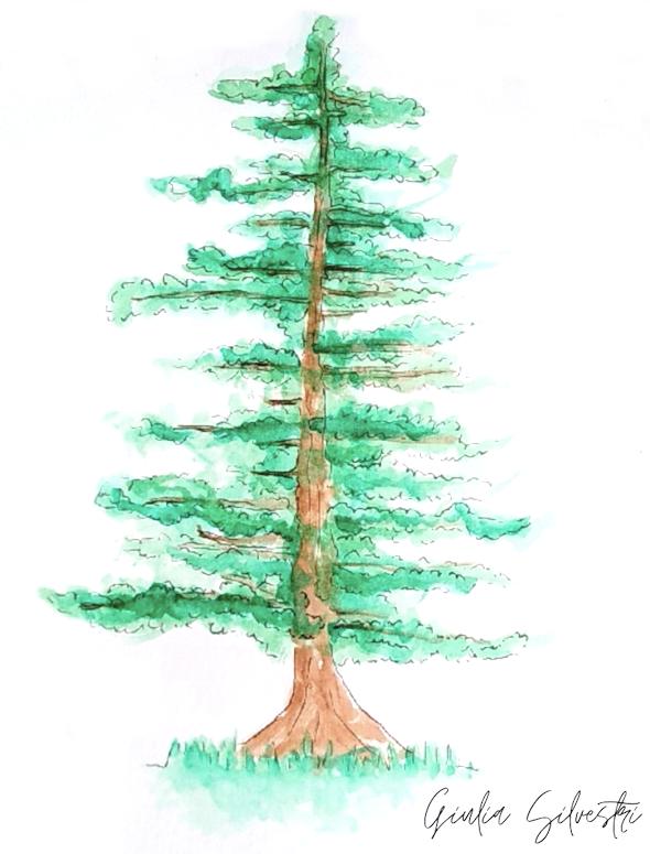 sequoia della foresta fossile