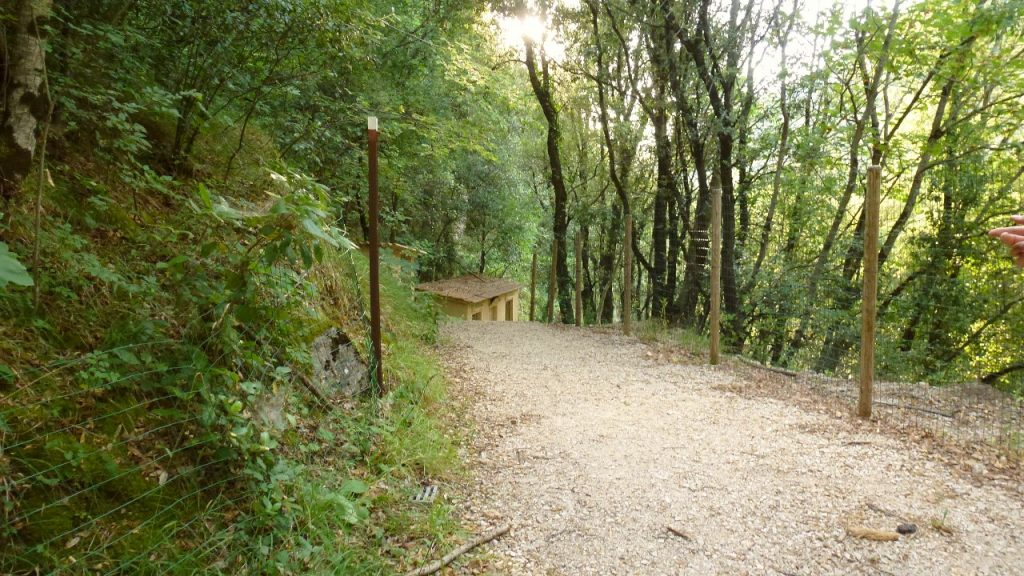 sentiero tra i boschi