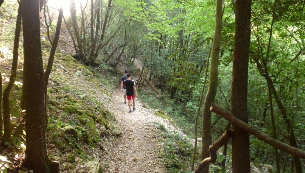 sentiero tra i boschi di sassovivo