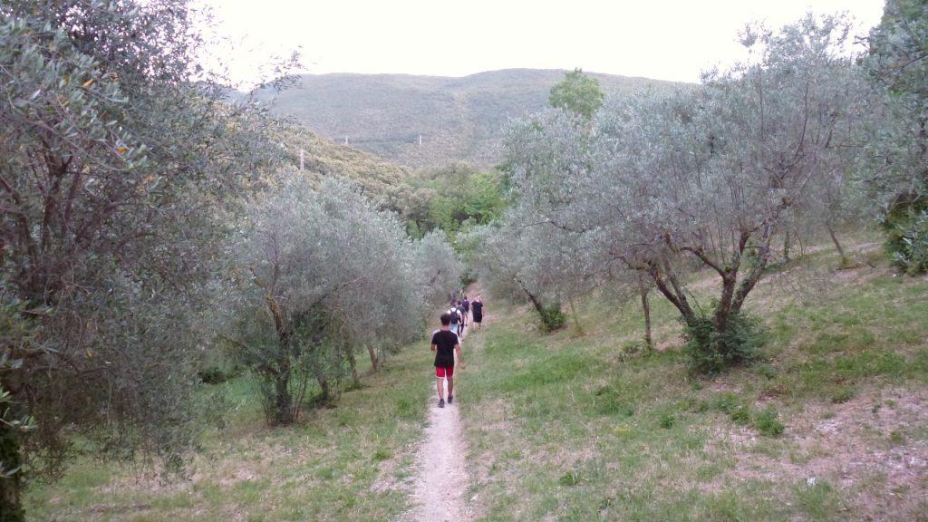 percorso tra gli ulivi